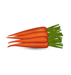 fresh carrot vegetable on isolated vector image