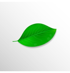 Realistic green leaf Ecology concept vector image