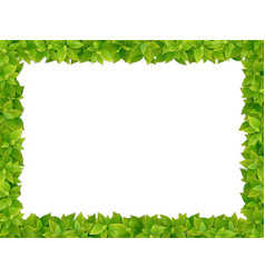 Square frame from fresh green leaves vector
