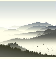 Coniferous forest on hills in fog vector