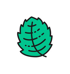 Mint lettuce basil herb flat color line icon vector