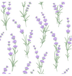 Seamless pattern of lavender flower vector