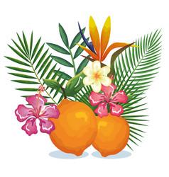 tropical garden with orange vector image