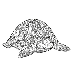 Turtle coloring book for adults vector image