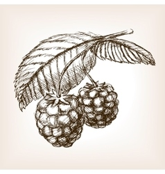 Raspberry hand drawn sketch style vector image vector image