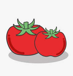 Delicious tomatos vegetables food icon vector