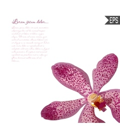 Floral invitation card with beautiful spring vector image