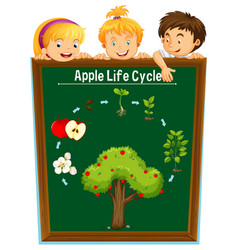 kids looking at apple life cycle vector image vector image