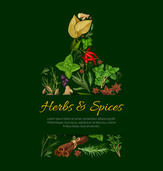 cutting board poster with culinary herbs and spice vector image