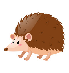 Little hedgehog on white background vector