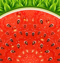 Optical watermelon background pattern vector image