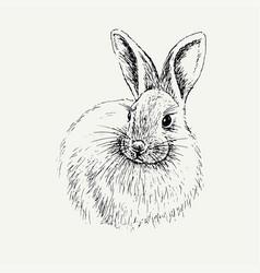rabbit sketch hand drawn vector image