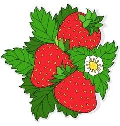 Ripe juicy strawberries vector