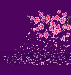 Sakura a lush cherry branch with flowers loses vector