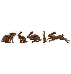 Wild hares set rabbits are sitting and jumping vector