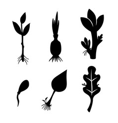 Different plants reproduction set icon vector