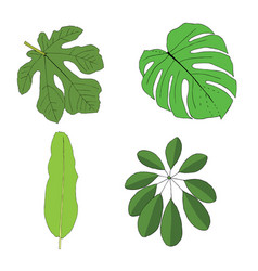 hand drawn tropical leaves set vector image
