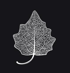 skeletonized leaf a lombardy poplar on a vector image