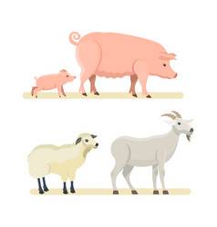 cute funny sheep goat pink pig isolated vector image