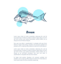 Bream fish seafood hand drawn vector