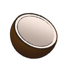 coconut fruit ico vector image