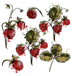 set of hand drawn strawberry plants for design vector image