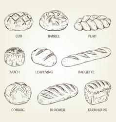 Outline set different kinds bread vector