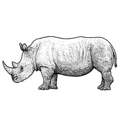 Rhinoceros drawing engraving ink vector
