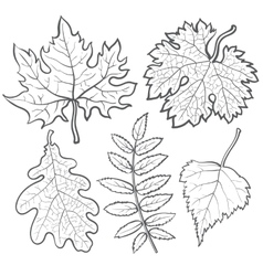 Set autumn leaves - maple aspen oak and rowan vector