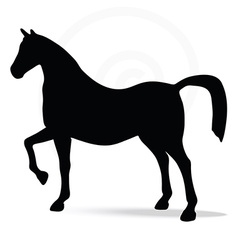 Silhouette in show horse pose vector