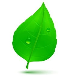 spring green leaf vector image