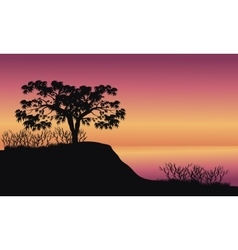 Trees at sunrise scenery vector image