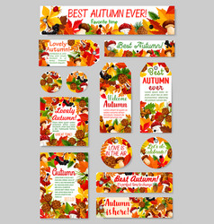 autumn nature tag and label set for sale design vector image