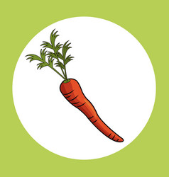 carrot healthy fresh image vector image