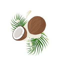 Fresh whole and a half coconut with green leaf vector