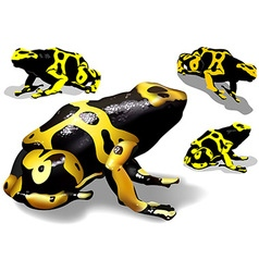 Yellow Banded Dart Poison Frog vector