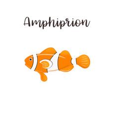 Amphiprion realistic cartoon vector