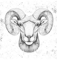 Hipster animal head ram or mouflon vector