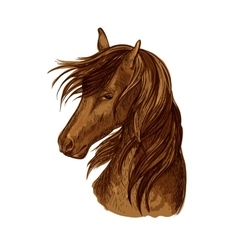 Horse head sketch of brown racehorse vector image