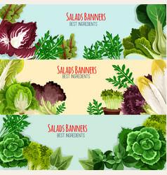 Salad greens and leaf vegetables banner set vector