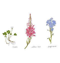 Wild plants and flowers hand drawn in color vector