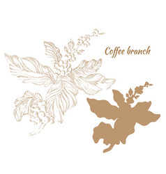 Coffee branch hatch vector