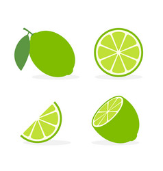 Lime slice green lemon vector