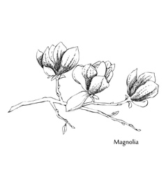 MagnoliaSketches of flowers vector