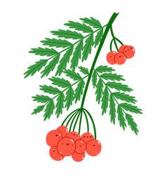 red rowan berries cute characters vector image