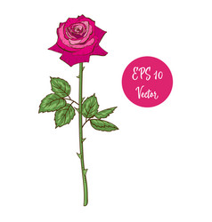 single pink rose flower beautiful vector image