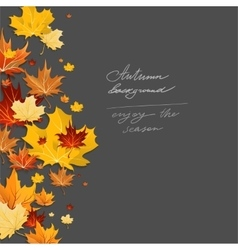 Autumn leaves design vector