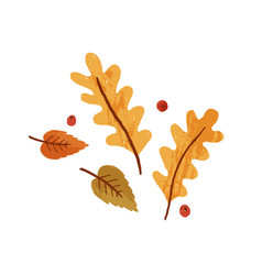 dry autumn leaves and rowan berries fall foliage vector image