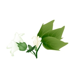 Fresh Cotton Flower with Bud on A Branch vector