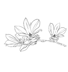 Hand drawn magnolia flowers vector